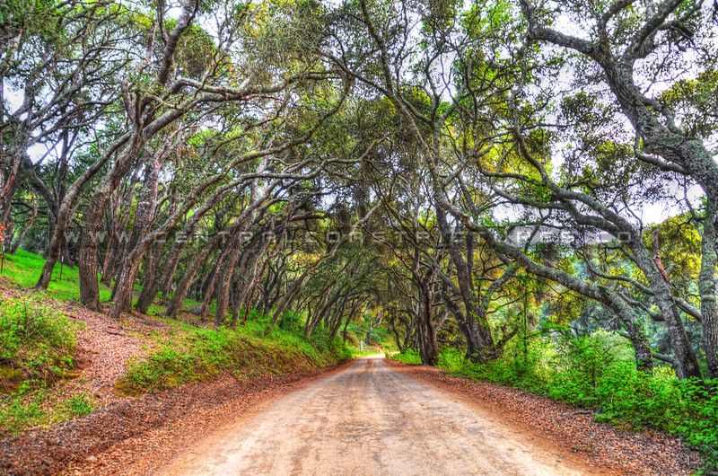 prefumo canyon trees_1098