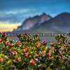 slo mountains flowers 5060-