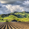 talley farms arroyo grande 6486