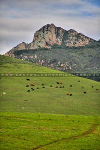 slo 7 sisters cows 3589