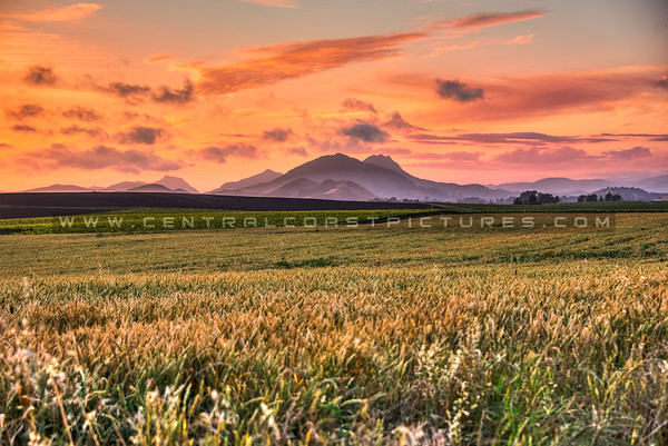 edna valley vineyard sunset 3376-