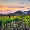edna valley vineyard sunset 3287-