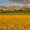 edna valley flower field 2734