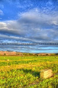 orcutt road hay farm_4478