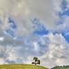 tree green hills 6503