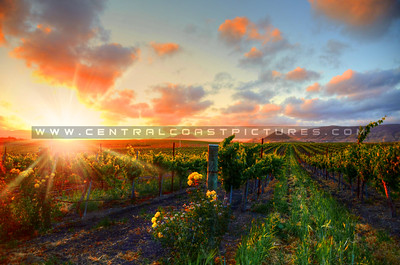 edna-valley-vineyard-sunset_9732
