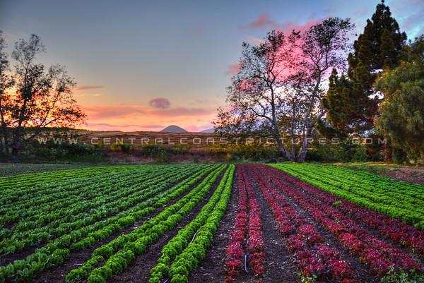 edna farm field 3368-
