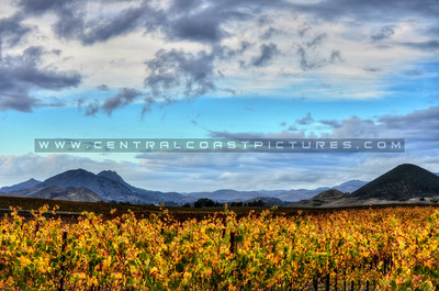 edna-valley-vineyard_9040