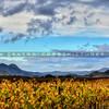 edna-valley-vineyard_9040