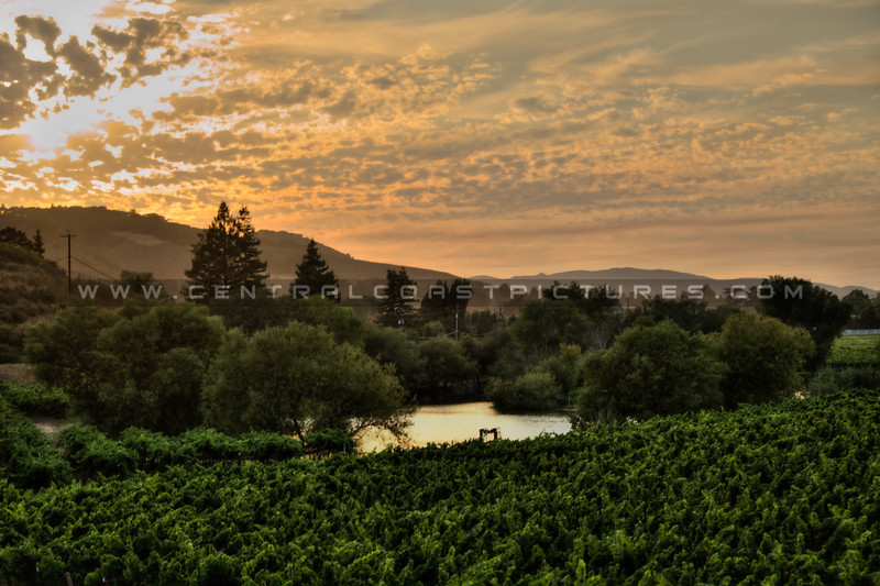 greengate farm sunset slo 4342