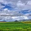 edna valley vineyard_6326