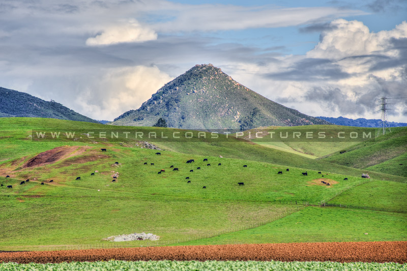 slo green hills 3520