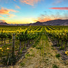 edna valley vineyard-3658b