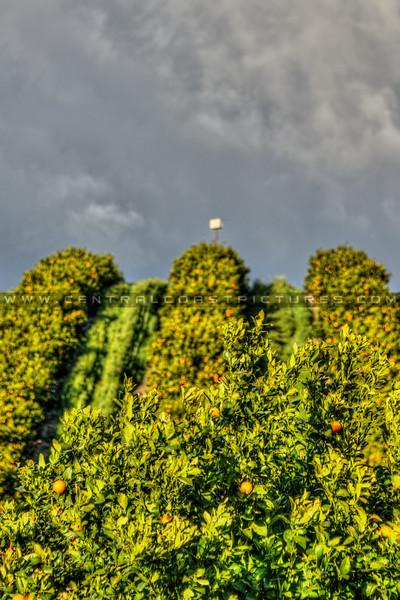 orange grove 6542