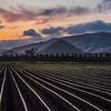 edna farm field-3408