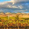 slo winery-4485