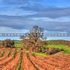 vineyard_0075