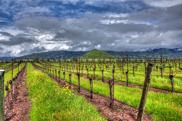 edna valley vineyard-6304