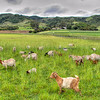 SLO LOVR goats 5206