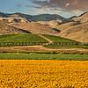 edna valley flower field 2716