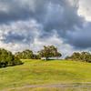 tree green hills 6509