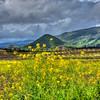 edna valley flowers 6341-
