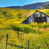 yellow-flowers-barn_2020