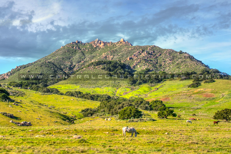 bishops peak horses 4885-