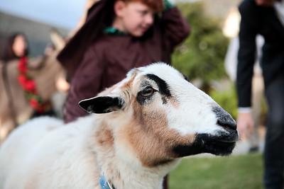 11 bitchin goat
