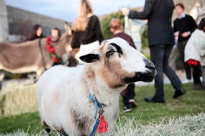 12 bitchin goat
