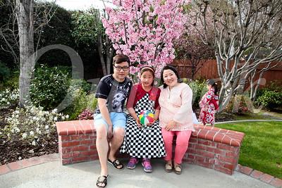 Carver Sakura Cherry Blossom Party