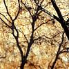 Tree shadows at the ruins