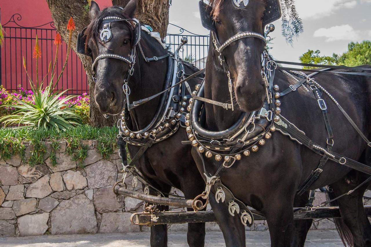 Bridal Horses