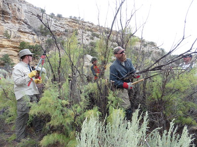 Wilderness Volunteers: 2016 San Rafael Swell Service Project