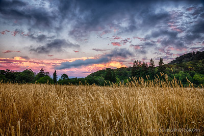 Lucas Valley Meadow