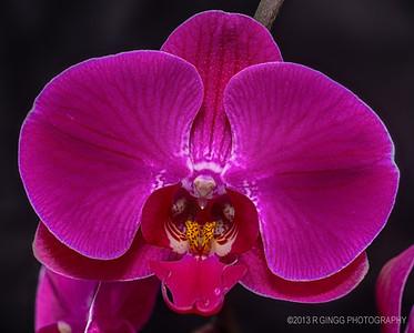 Orchid rebirth 2