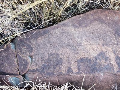 San Bushman Rock Art Rock Engraving of a Rhinoceros