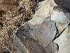 San Bushman Rock Art Engraving in dry grass