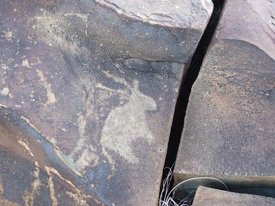 San Bushman Rock Art Rock Engraving of a gemsbok