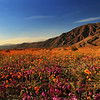 Anza-Borrego Desert State Park : 1 gallery with 55 photos