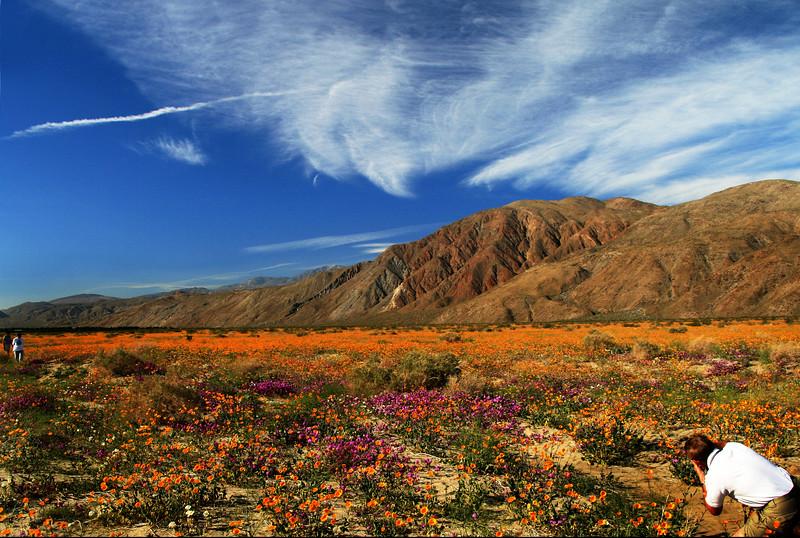 Photographer, Borrego Springs Flower Fields