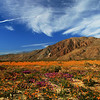 Photographer, Borrego Springs Flower Fields