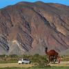 California, Anza-Borrego Desert State Park