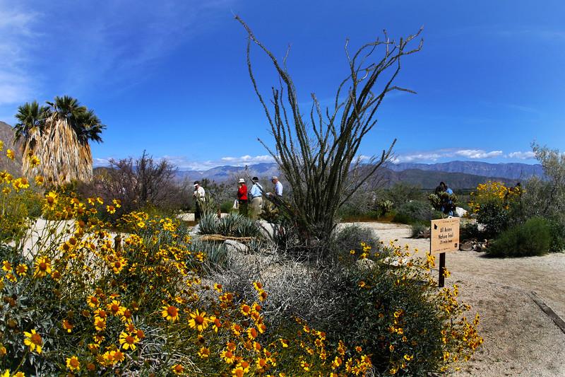 Anza-Borrego Desert State Park, Borrego Springs, CA