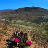California, Anza-Borrego State Park, View on Badlands