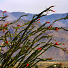 Anza-Borrego Desert State Park,  Ocotillo, Borrego Springs, CA