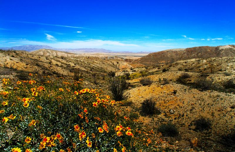 Anza-Borrego Desert State Park, Borrego, Ca