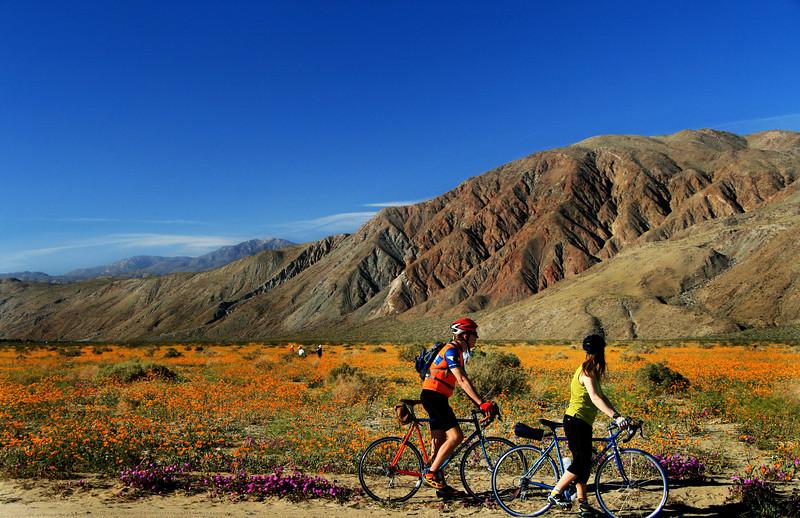 Desert in Bloom, Borrego Springs, CA