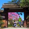 San Diego, Balboa Park Japanese Friendship Garden
