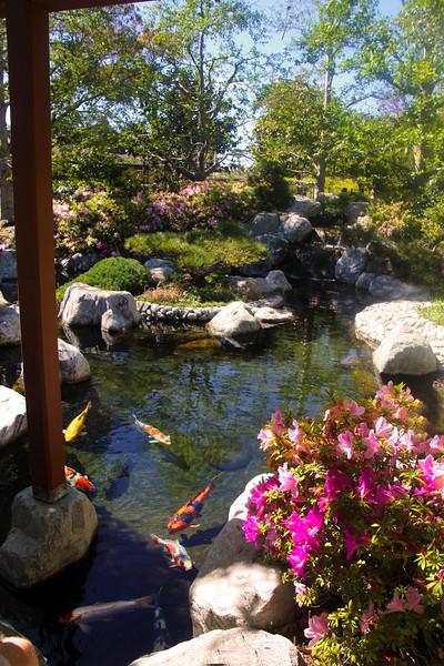 San Diego, Balboa Park Japanese Friendship Garden, Koi Pond
